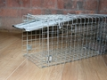 Rabbit, Squirrel, Rat, Mink, Vermin, Medium Folding Humane Animal Trap