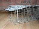 PestExpel® Rabbits, Squirrels, Mink, Feral Cat, Vermin,Animal Folding Cage trap